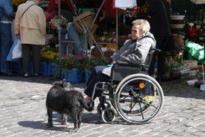 rolstoel-met-blindegeleidehond
